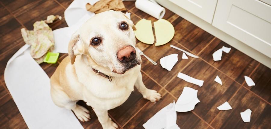 The Dog Ate my Resume