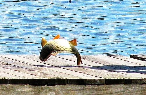 fish-flopping