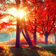Fall FOWARD into your career